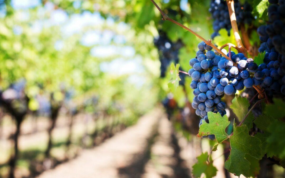 Einladung: Politische Online-Weinprobe
